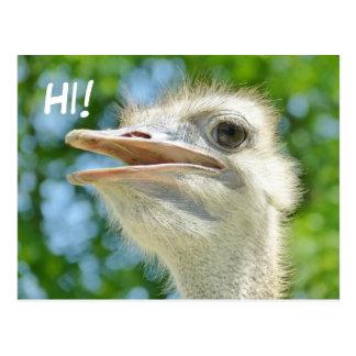 Funny African Ostrich - Hi Postcard