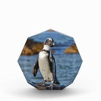 funny African Penguin, Boulders Beach Awards