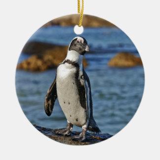 funny African Penguin, Boulders Beach Ceramic Ornament