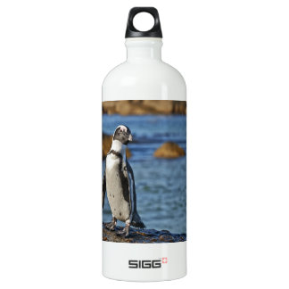 funny African Penguin, Boulders Beach Water Bottle