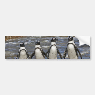 funny African Penguins, Cape Town Bumper Sticker
