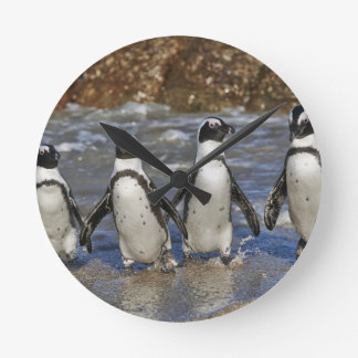 funny African Penguins, Cape Town Clock