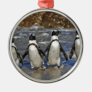 funny African Penguins, Cape Town Metal Ornament