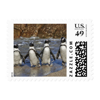 funny African Penguins, Cape Town Postage Stamp