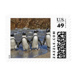 funny African Penguins, Cape Town Stamps