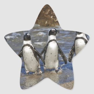 funny African Penguins, Cape Town Star Sticker