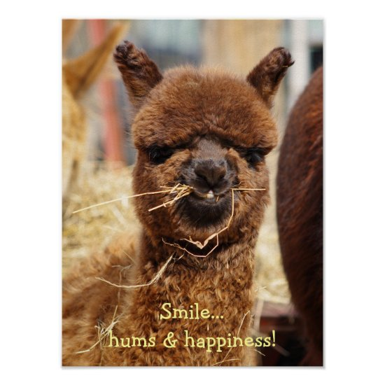 Funny Alpaca Poster