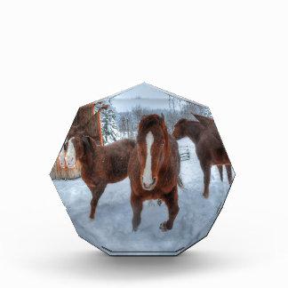 Funny Amorous Stallion and Reluctant Mare Horses Acrylic Award