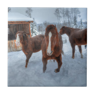 Funny Amorous Stallion and Reluctant Mare Horses Ceramic Tile