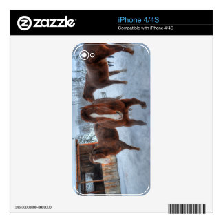 Funny Amorous Stallion and Reluctant Mare Horses Decals For The iPhone 4S