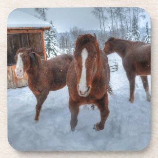 Funny Amorous Stallion and Reluctant Mare Horses Drink Coaster