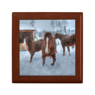 Funny Amorous Stallion and Reluctant Mare Horses Gift Box