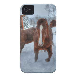 Funny Amorous Stallion and Reluctant Mare Horses iPhone 4 Cover