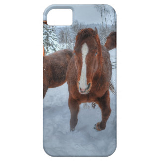 Funny Amorous Stallion and Reluctant Mare Horses iPhone SE/5/5s Case