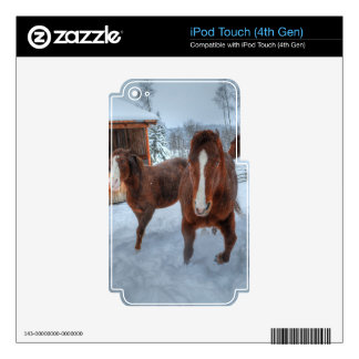 Funny Amorous Stallion and Reluctant Mare Horses iPod Touch 4G Decals