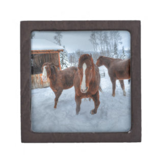 Funny Amorous Stallion and Reluctant Mare Horses Jewelry Box