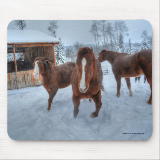 Funny Amorous Stallion and Reluctant Mare Horses Mouse Pad