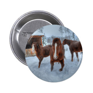 Funny Amorous Stallion and Reluctant Mare Horses Pinback Button