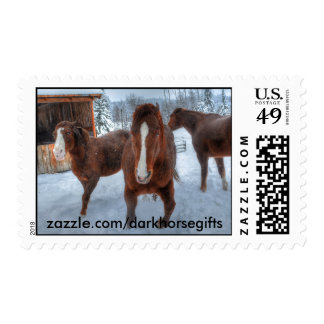 Funny Amorous Stallion and Reluctant Mare Horses Stamp