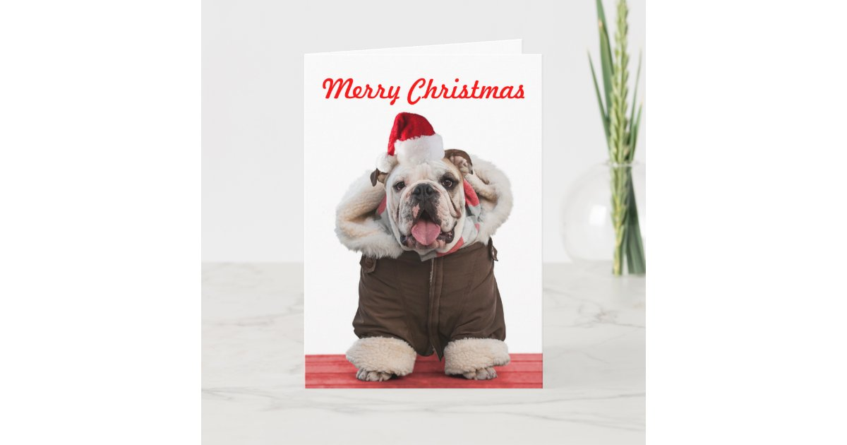 Funny and cute Bulldog Christmas cards | Zazzle.com