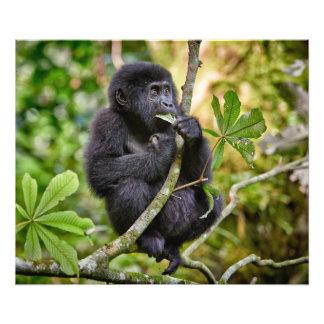 funny and cute juvenile mountain gorilla 5 photo print