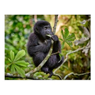 funny and cute juvenile mountain gorilla 5 postcard