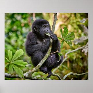 funny and cute juvenile mountain gorilla 5 poster