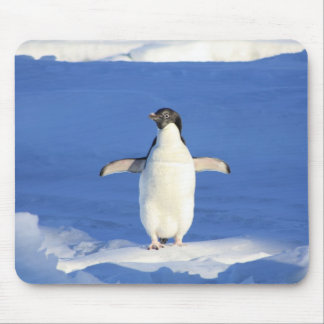 Funny and cute little baby penguin mouse pad
