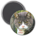 """Funny ANGRY CAT saying, """"NOT TODAY!"""" 3 Inch Round Magnet"""