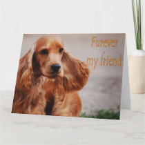 Funny animal memes Dog memes Humorous Photos Card