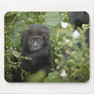 funny baby mountain gorilla, beringei beringei mouse pad
