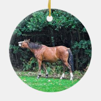 Funny Bay Pony Bad Attitude Horse Photo Ceramic Ornament