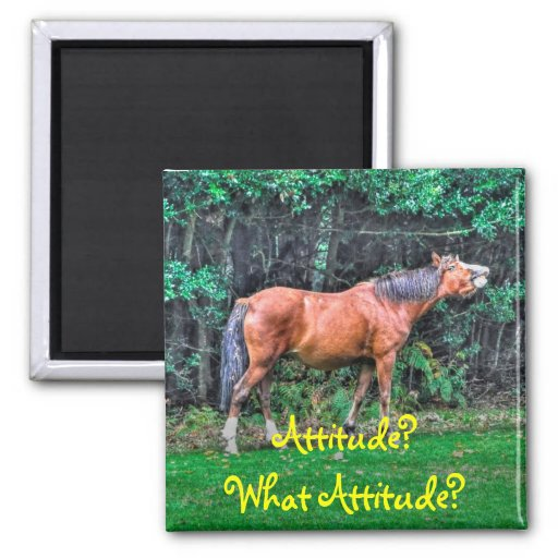 Funny Bay Pony Bad Attitude Horse Photo Magnets