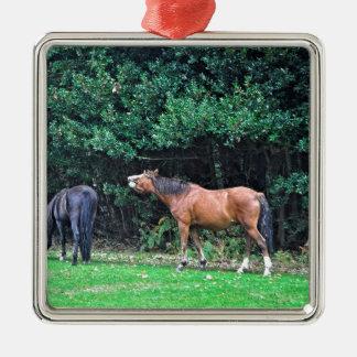 Funny Bay Pony Bad Attitude Horse Photo Metal Ornament