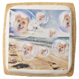 Funny Beach Corgis Square Shortbread Cookie