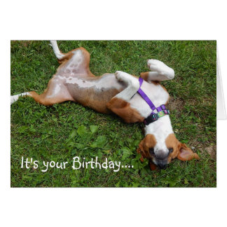 funny beagle greeting cards  zazzle, Birthday card