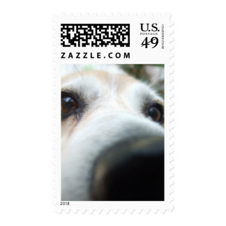 Funny Beagle Nose Postage Stamp