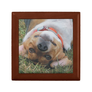 Funny Beagle Rolling in Grass Gift Box