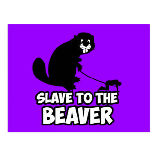 Funny Beaver Post Cards