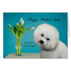 Funny Bichon Mother's Day Card