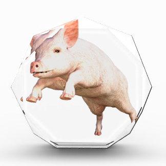 Funny big young  pig jumping high acrylic award