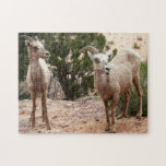 Funny Bighorn Sheep at Zion National Park Jigsaw Puzzle