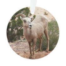 Funny Bighorn Sheep at Zion National Park Ornament