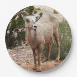 Funny Bighorn Sheep at Zion National Park Paper Plate