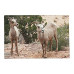 Funny Bighorn Sheep at Zion National Park Placemat