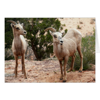 Funny Bighorn Sheep Card