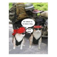 Funny Biker Cats Postcard