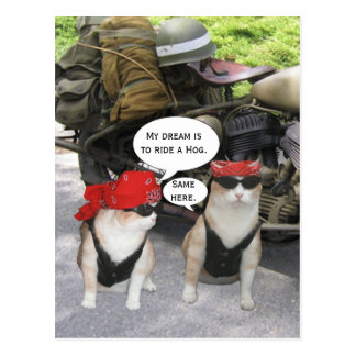 Funny Biker Cats Post Card
