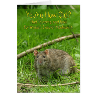 Funny Birthday Card - Wild Brown Rat