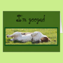 Funny Birthday Card with Sleeping Basset Hound